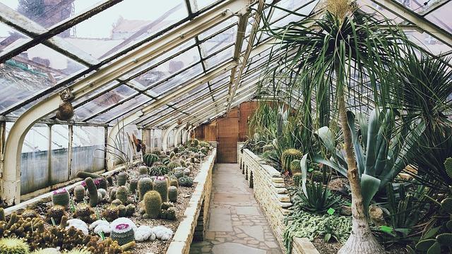 skleníkové pěstování