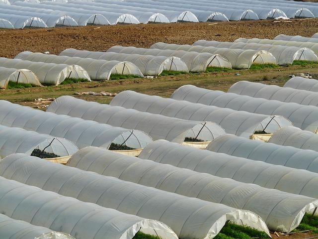 skleníky na poli
