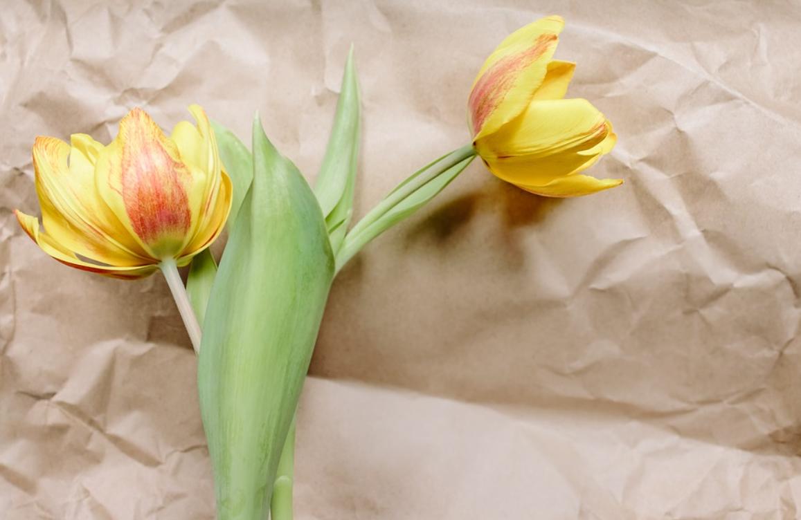 papír a květiny